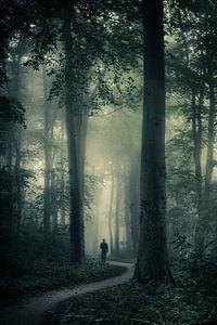 Verdwaald tussen de bomen