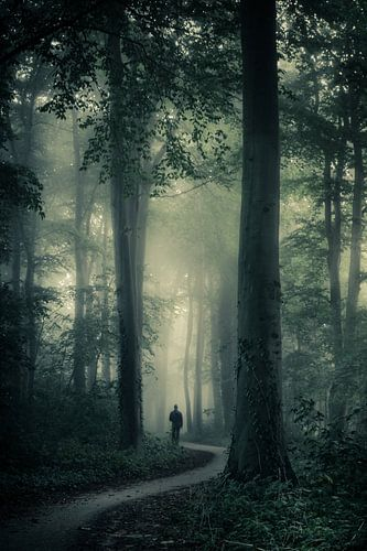 Verdwaald tussen de bomen van