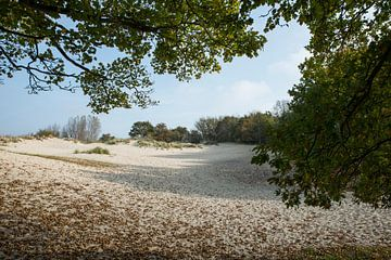 zandvalkte bij burgh-haamstede von Compuinfoto .