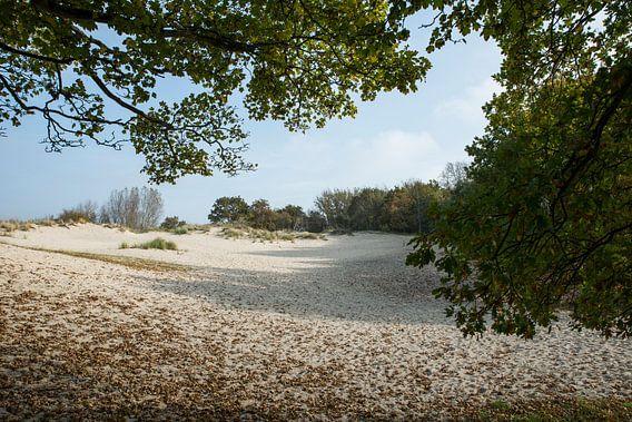 zandvalkte bij burgh-haamstede van Compuinfoto .