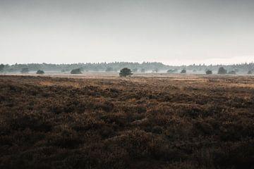 Die blaue Stunde   Die Veluwe-Heidelandschaft von Nanda van der Eijk