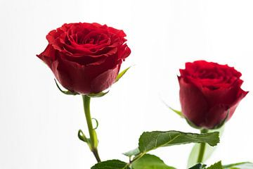 Liefde en rode rozen von Cilia Brandts