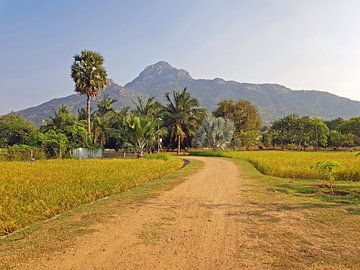 De heilige berg Arunachala in Tamil Nadu in India van Nisangha Masselink