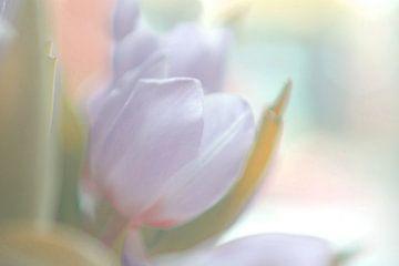 spring pastels sur bob van den berg