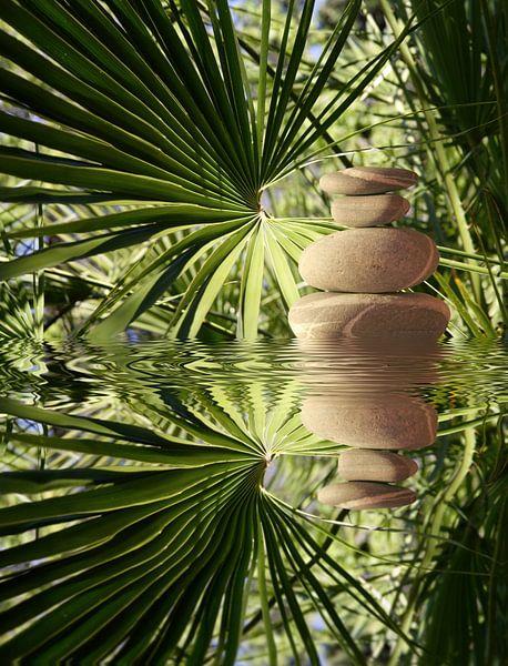 Zen tropical van Martine Affre Eisenlohr