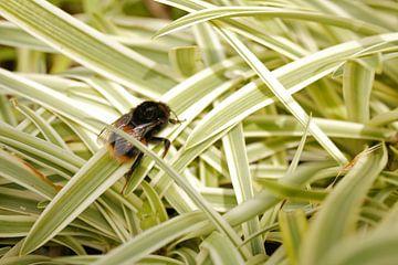 Beschäftigte Biene auf einem Blatt von Inge Teunissen