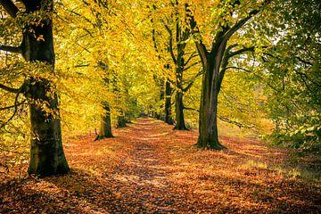 Bospad in de herfst van Marcel Bakker
