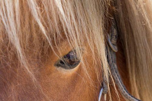 Closeup van het oog van een bruin paard