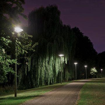 Laat op de avond sur