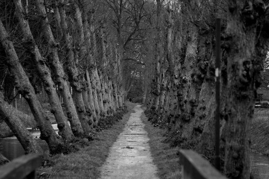 Between the trees van Louise Poortvliet