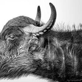 Waterbuffel van Jaap Tempelman