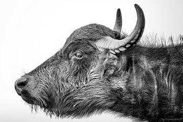 Wasserbüffel von Jaap Tempelman