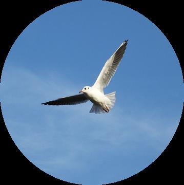 vrij als een vogel / free as a bird van Pascal Engelbarts