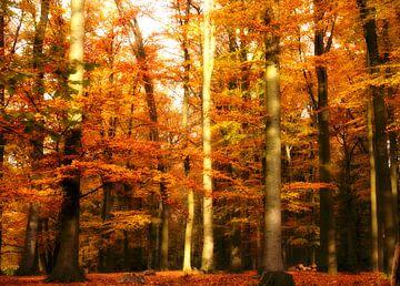 Herfst in het bos van Jessica Berendsen