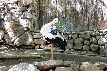 Ein Storch von Marvin Taschik