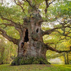 The Majesty Oak van Lars van de Goor