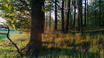 Waldspaziergang van Jenny Heß
