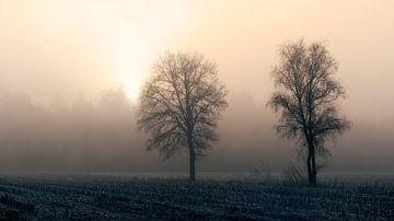 Hier kommt die Sonne von Kees van Dongen