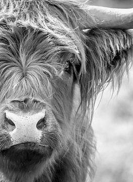 Schottischer Highlander Porträt Schwarz und weiß von Diana van Tankeren