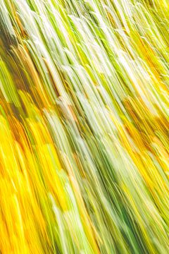 gelb mit ein wenig grün von Jan Peter Jansen