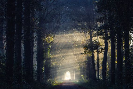 Running into the light van Edwin Mooijaart