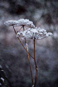 Zweite Blütezeit von Twan van Vugt