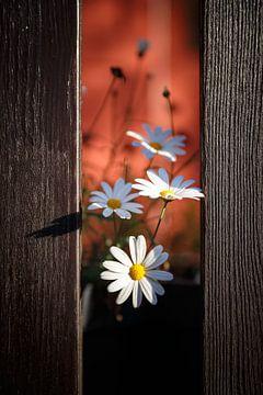 Bloemen van John Groen
