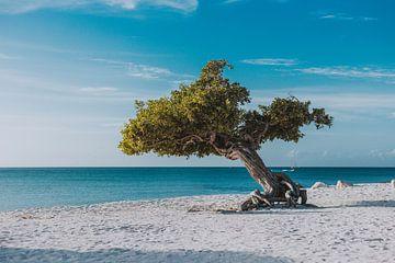 Fofoti Boom op het strand van Eagle Beach in Aruba von Aruba Paradise Photos