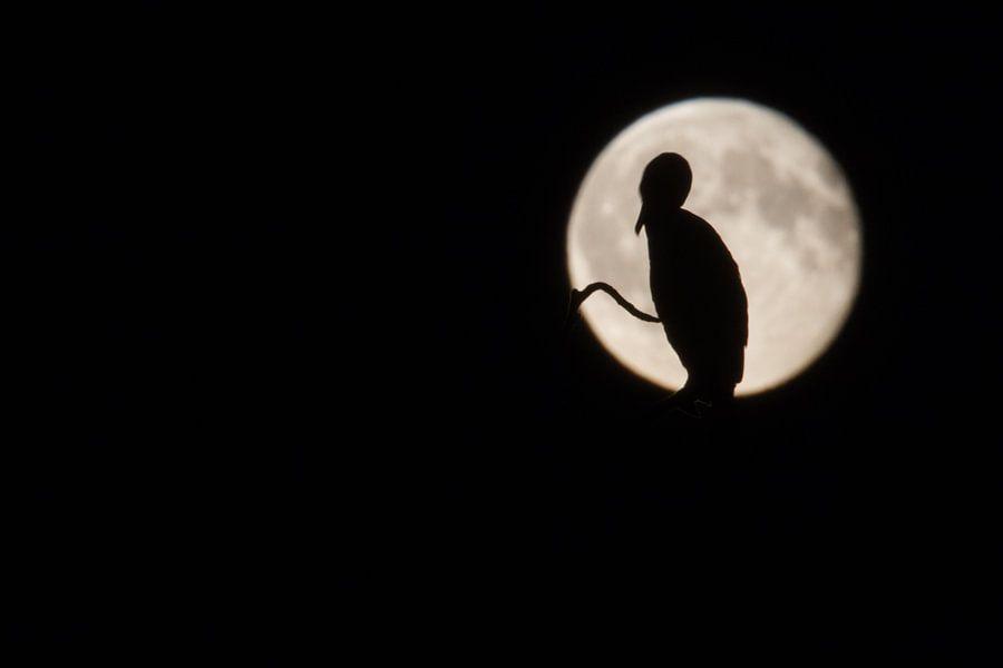 Aalscholver voor volle maan van Menno van Duijn