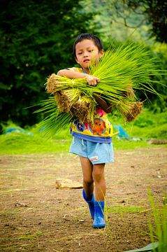 Jongen draagt rijst von Olivier Van Acker