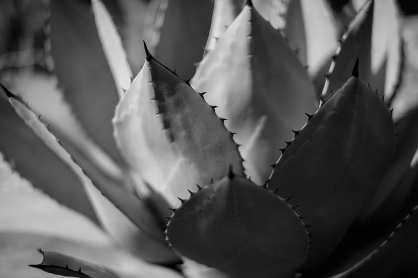 Pflanzen abstrahiert von Rene  den Engelsman