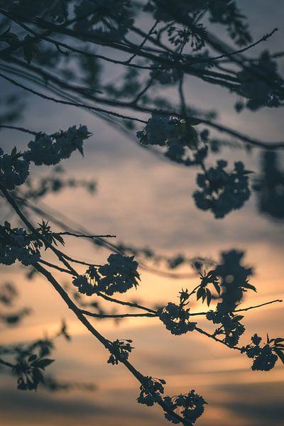 Evening blossoms van Alessia Peviani