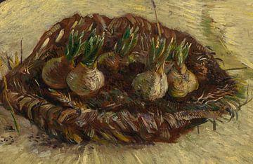 Vincent van Gogh, Korb mit Hyazinthenzwiebeln