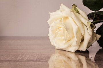 Witte roos von Ester Dammers