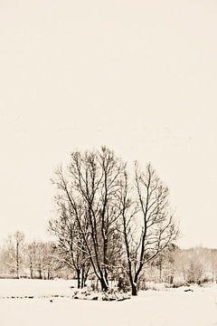 Bosje in sneeuw. von Rens Kromhout