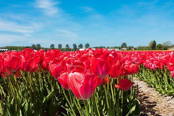 Rode tulpen van Leo Kramp Fotografie