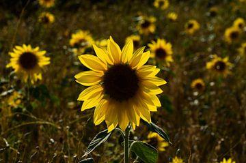 Blumenleuchte von zwergl 0611
