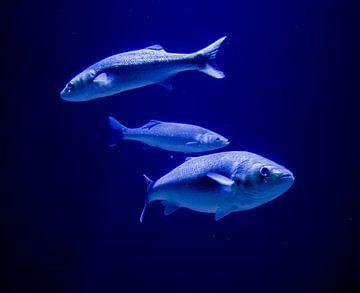 Zoveel vis in de zee van Stoka Stolk
