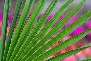grüne Fächerpalme - Palmblatt mit Hintergrund blumenbeet van Susanne Bauernfeind