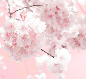 Blossom van