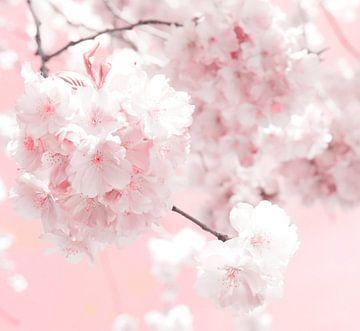 Blossom sur Jacky Gerritsen