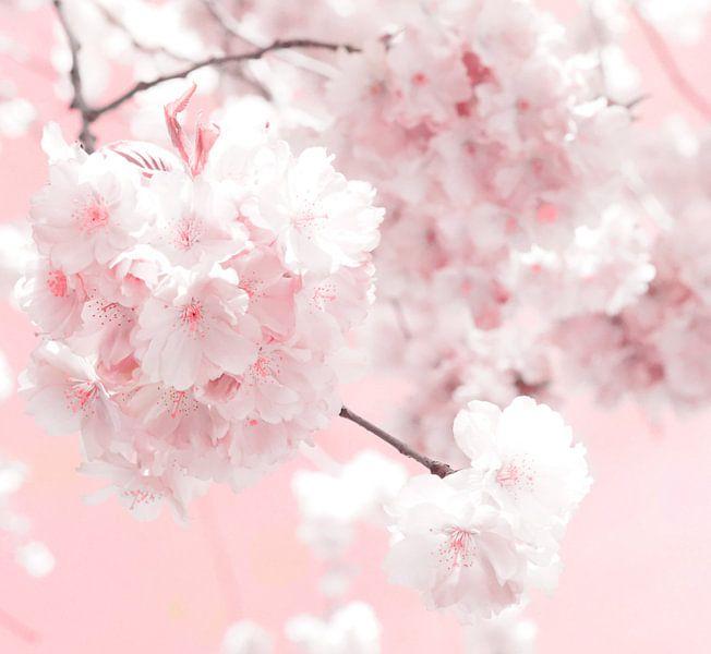 Blossom van Jacky Gerritsen