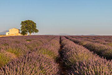 Lavendelfeld Süd-Frankreich von Riccardo van Iersel