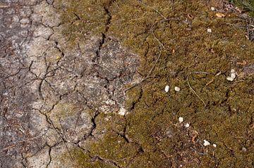 Barstende aarde von Anita van Hengel