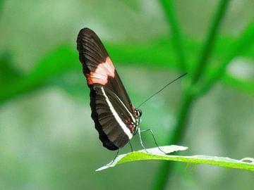 Balancerende vlinder  van Lin McQueen