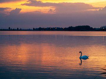 Le lac des cygnes sur Martijn Wit
