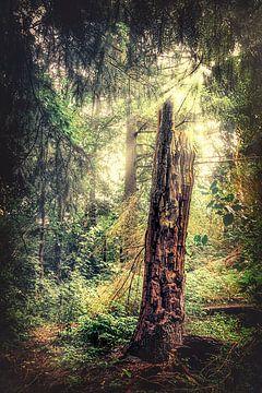 Levensboom - dode boom in het midden van het sprookjesbos in het mooie Cuxhaven van Jakob Baranowski - Off World Jack