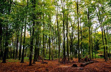 Herfst in het bos van Tanja de Boer