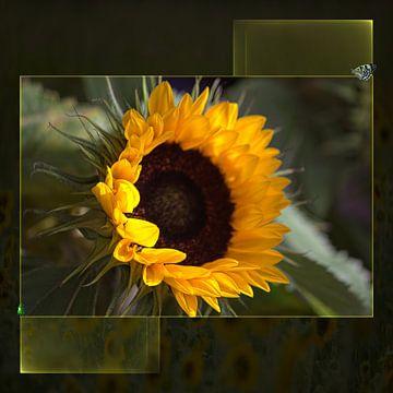 Sonnenblume mit Rand von Carla van Zomeren