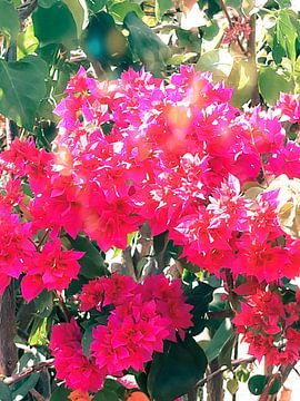 Rode bloemenpracht van Renee Alexandra Serlier